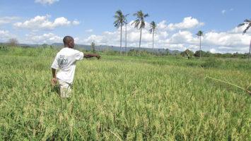 tanzanian_rice_farmer